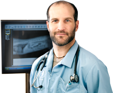 Veterinarian Radiology and Ultrasound